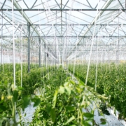 greenhouse horticulture lighting monitoring