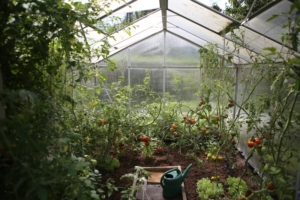 For World Food Day 2020, consider growing food at home!
